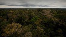 Brazil: The Amazon Basin show
