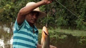 Animals of the Amazon photo