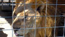 Hoarding Exotic Animals 節目