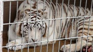 Hoarding Exotic Animals photo
