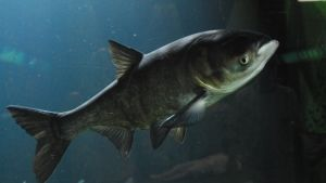 Monster Fish photo