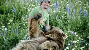 الدب الأشيب صورة