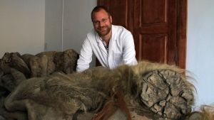 Mammoth Remains photo