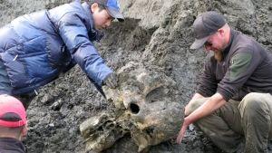 Mammoth Remains photo