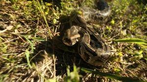 Python Action photo