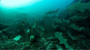 Shark Madness photo