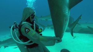 Shark Encounters photo