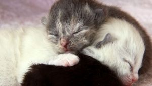 Cute Kittens photo