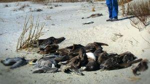 Shocking Animal Deaths photo