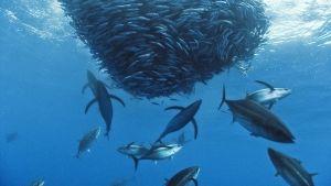 مملكة البحار صورة