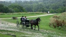 Amish Wedding show