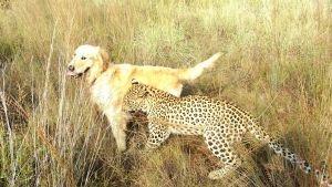 أصدقاء الحيوان غير المحتملين صورة