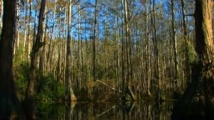 The Swamps photo