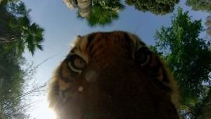 Betty White's Big Cats photo