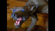 Wild Horror Story: Foto programma
