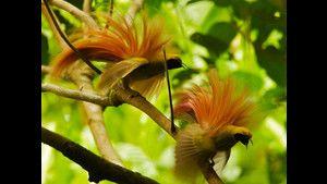 Le ali del paradiso con D. Attenborough: Foto foto