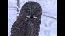 I predatori dei cieli: Foto programma