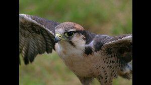 I predatori dei cieli: Foto foto