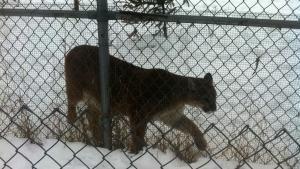 Beasts Break Free photo