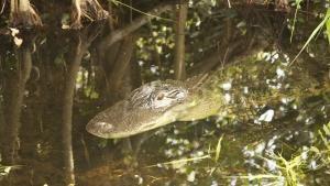Il paradiso degli alligatori foto