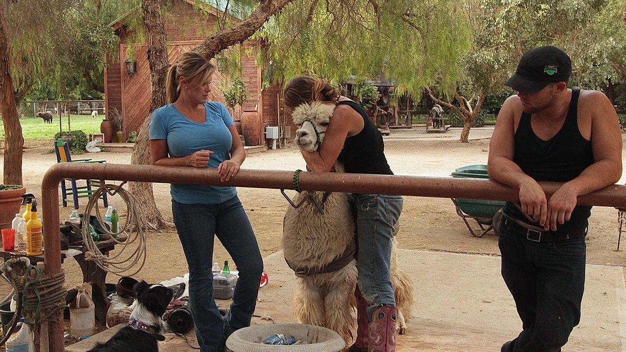 Farm and Family Photos - Shear Madness - National