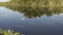 Everglades show