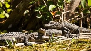 Florida's Wildlife photo