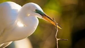 Florida's Wildlife photo