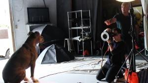 Pit Bulls photo