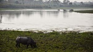 Elephant Kingdom photo