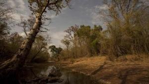غابات النمور صورة