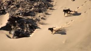 Desert Kingdom photo