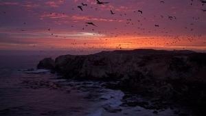 Coasts photo