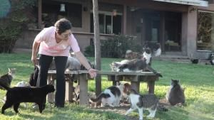 Lady With 700 Cats photo