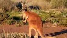 Exotic Australia show