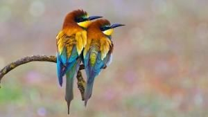 Colourful Wildlife photo