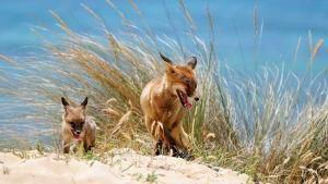 Colourful Wildlife photo