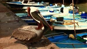 Le isole Galapagos foto