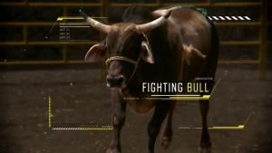 Raging Bull photo