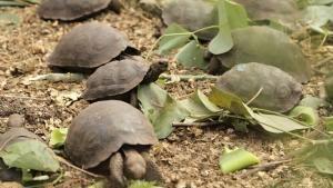 Galapagos photo