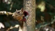 Squirrels in Action show