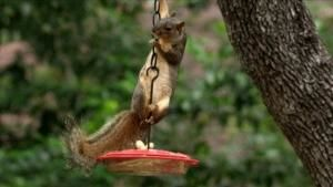 Squirrels in Action photo