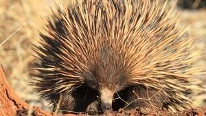 Wild Australia photo