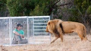 Un coraggio da leoni foto