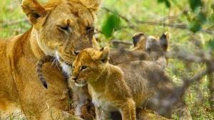 I gatti più wild foto
