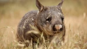 Realm Of The Wombat photo