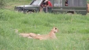 A contatto con gli animali foto
