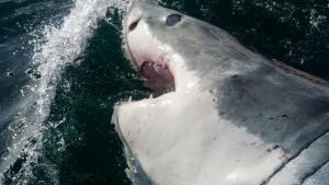 Pericoli in fondo al mare foto