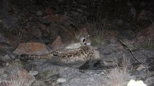 La terra dei leopardi foto