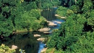 Borneo selvaggio foto